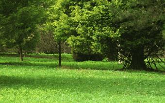 Contenido evergreen para tu blog